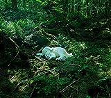 slumbers -Deluxe Edition(CD +オマケ)-