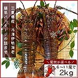 三重県産 伊勢海老詰合せ 11尾で約2kg 刺身用瞬間冷凍 伊勢エビ 尾数選べます