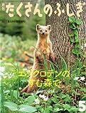 月刊 たくさんのふしぎ 2011年 05月号 [雑誌]