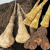 国華園 種芋 濃厚山いもセット 3種15個【※発送が国華園からの場合のみ正規品です】