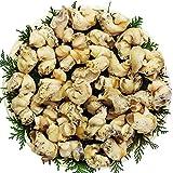 甲羅組 ボイル つぶ貝 1kg カナダ産