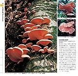 増補改訂新版 日本のきのこ (山溪カラー名鑑) 画像