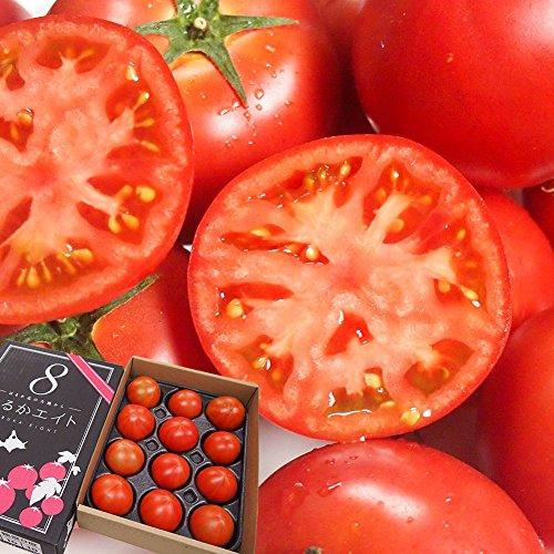 フルーツトマト 高糖度 トマト はるかエイト 約800g 12~15個
