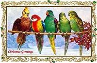 アンティーククリスマスアート~ Art Nouveau Borderインコ~ ~ Budgies ~オカメインコ~ラブバード~鳥~ 6パック新しいマットヴィンテージ画像Large空白ノートカード封筒付き