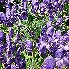 種子:種子 - トリカブト - 25種