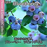 【失敗しない人気の果樹】5種から選べるブルーベリー・ラビットアイ系苗 (サウスランド)