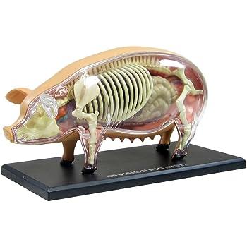 青島文化教材社 スカイネット 立体パズル 4D VISION 動物解剖 No.01 豚解剖モデル