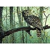LovetheFamily 油絵 数字キット塗り絵 手塗り DIY絵 デジタル油絵 数字油絵 フクロウ 40x50cm ホーム オフィス装飾