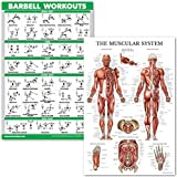 """QuickFit Barbell Workouts and Muscular System Anatomy Poster Set - Laminated 2 Chart Set - Barbell Exercise Routine & Muscle Anatomy Diagram (18"""" x 27"""")"""