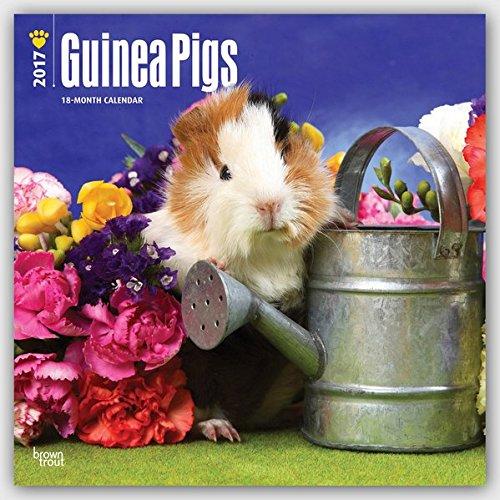 Guinea Pigs 2017 Calendar (Square Wall)