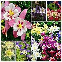 種子:50個:種子盆栽新しいライブへの容易な50pcsの花の種爪バケット花の種
