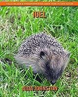 Igel: Tolle Bilder & Wissenswertes ueber Tiere in der Natur