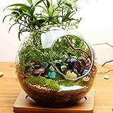 イッピー ボール型DIYモスマイクロランドスケープガラス瓶ダブルホール多肉植物花瓶ホームデコレーション