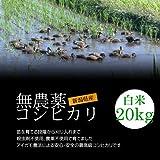 【お中元・夏ギフト】無農薬米コシヒカリ 白米(精米) 20kg(10kg×2袋)/アイガモ農法で育てた安心・安全の新潟米