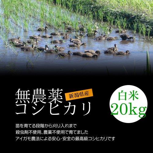 無農薬米コシヒカリ 白米(精米) 20kg(10kg×2袋)[即日発送]/アイガモ農法で育てた安心・安全の新潟米