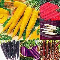 種子パッケージ:新しいガーデンベジタブルSeedssブルームマルチカラーのニンジンの種子Jtoo 06