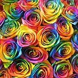 誕生日プレゼント レインボーローズ 花束 フラワーギフト カラフルでキュート レインボーローズの花束【10本】