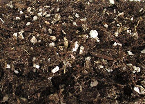 【 翔美苑 】 樹皮培養土 (パーライト入り) 500ml 苔栽培に最適な土 テラリウム などに