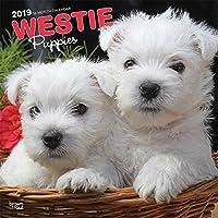 BrownTrout ウェストハイランドテリア 子犬 ウォールカレンダー ウェストハイランドテリア