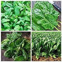 Spinach - Seeds of 4 Vegetable Plants' Varieties - 4 Seed Packages