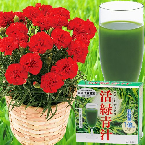 カーネーション&イワタニ「活緑青汁」≪遅れてゴメンね母の日ギフト お届けは5月11日から15日≫