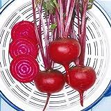 【メール便配送】 国華園 野菜たね 健康野菜 ビーツ 1袋(10ml)【※発送が国華園からの場合のみ正規品です】