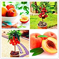 10 PCS/バッグスイートピーチ盆栽マウンテンピーチ秋レッドピーチツリーフルーツ植物ホーム&ガーデン用