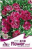 1オリジナルパック、種子30粒/パック、赤いカーネーションの花カーネーションCaryophyllusハーブ#のA003