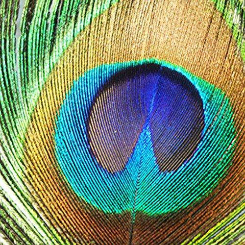 羽根 装飾用の羽根 100枚 孔雀の羽根とクジャクの羽 25-30cm 工芸品 DIY 目玉羽 自然色