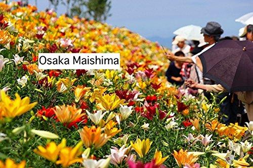 Osaka Maishima (Italian Edition)
