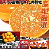 せとか 5kg M~4Lサイズ 佐賀 愛媛 愛知 産地厳選 訳あり 簡易包装 柑橘類 タンゴール種