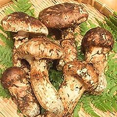 松茸 (開き・粒) 200g 国産 天然松茸 飛騨産