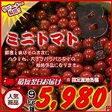訳あり規格外品!! ミニトマト 9kg箱