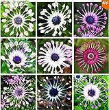 家庭菜園のための100pcs /バッグオステオスペルマム種子、デイジーの種、オステオスペルマム花、8色、盆栽の花の種、自然鉢植え
