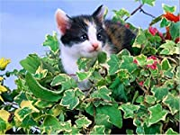 LIPHISFUN ダイヤモンド刺繍キットディー5dダイヤモンド絵画動物モザイク模様写真ラインストーン猫クリスマスクリエイティブギフト(30x40cm)