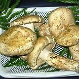 松茸(マツタケ) 北米、カナダ産 約500g詰め まつたけ