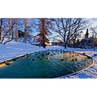 冬、雪、木、池、カモ キャンバスの 写真 ポスター 印刷 旅行 風景 景色 - (105cmx70cm)