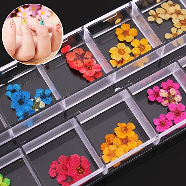 小川ブートキャリッジドライフラワー 押し花 ネイル アートパーツネイルパーツ ハンドメイドアクセサリー 60枚入り12色入り×5枚 透明収納ケース