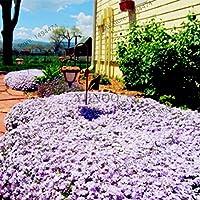 200pcs / bagミックスカラーロッククイーンズライプスタイム盆栽多年草花植物地面カバー花飾り:10