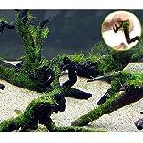 (水草)巻きたて 南米ウィローモス 枝状流木 Mサイズ(無農薬)(1本) 本州・四国限定[生体]