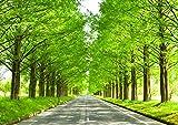 絵画風 壁紙ポスター (はがせるシール式) -地球の撮り方- どこまでも続く並木道 メタセコイア並木の新緑 日本街路樹百景 滋賀県高島市 日本の絶景 キャラクロ C-ZJP-041A1 (A1版 830mm×585mm) 建築用壁紙+耐候性塗料