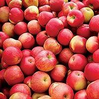アロマフレグランスソルト スパイスドアップル(Spiced Apple)