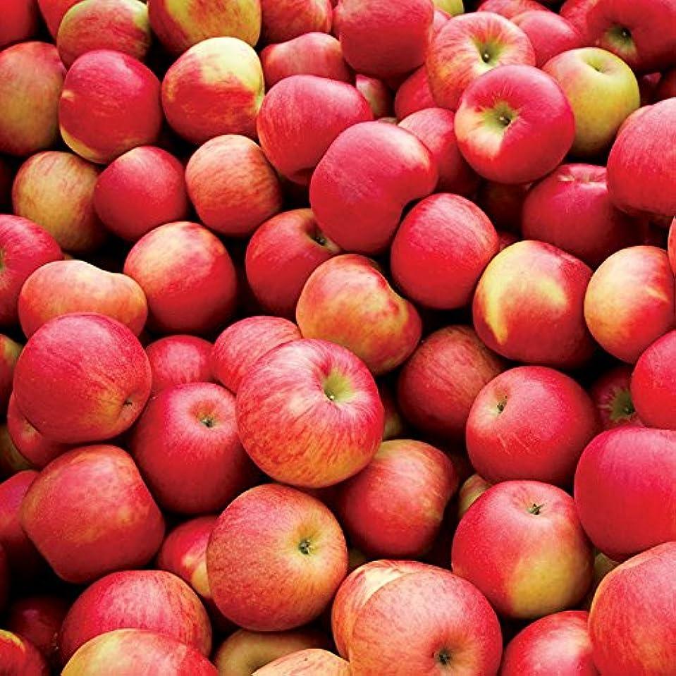 処理コロニアルなしでアロマフレグランスオイル スパイスドアップル(Spiced Apple)