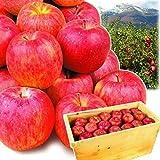 国華園 ご家庭用 青森産 木箱 サンふじ 約20kg1箱 林檎 りんご