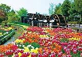 シンプルスタイル 300ピース チューリップ畑-花薫る- 03-768