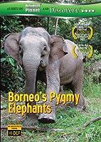 Borneos Pygmy Elephants [DVD] [Import]