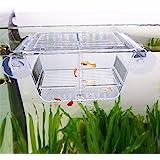 capetsma Fish Breeding Box, Acrylic Fish Isolation Box with Suction Cups, Aquarium Acclimation Hatchery Incubator for Baby Fi