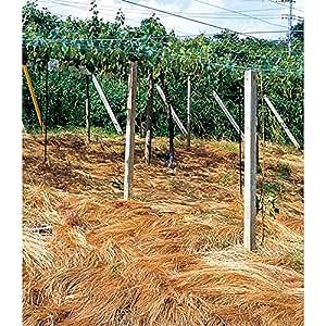 【種 2kg】 雪印系 ナギナタガヤ 雑草抑制 果樹草生栽培用 [播種期:9~11月] 雪印種苗 米S代不