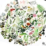 65PCS Small Scrapbook Stickers, Doraking DIY Decoration Transparent Sulfuric Paper Green Plants Stickers for Scrapbook, Decor