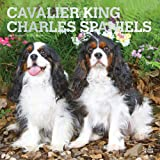 Cavalier King Charles Spaniels 2021 12 x 12 Inch Monthly Square Wall Calendar with Foil Stamped Cover, Animals Dog Breeds Pup